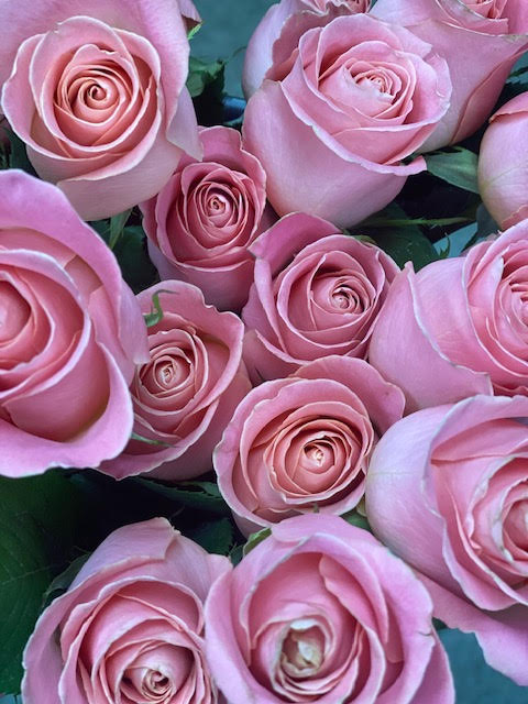 Hermosa/pink Roses