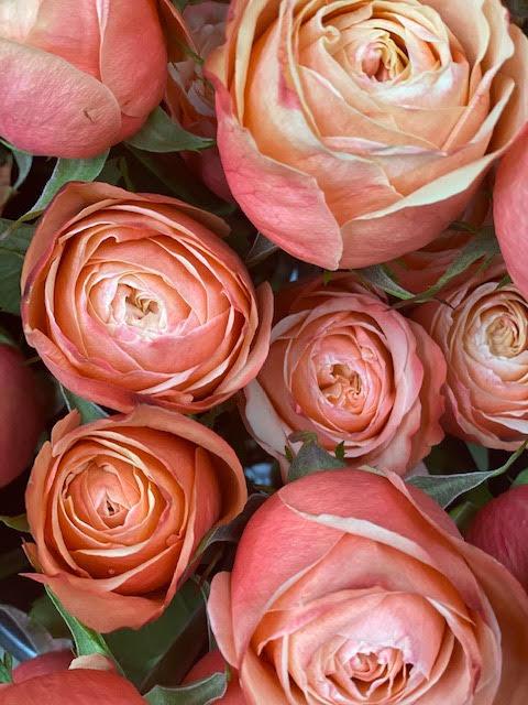 Kahala/peachy Roses